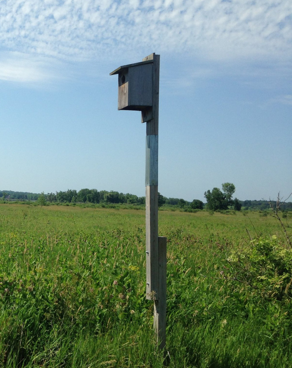 A kestrel nestbox sits in a grassland in southcentral Wisconsin. Photo by Madison Audubon