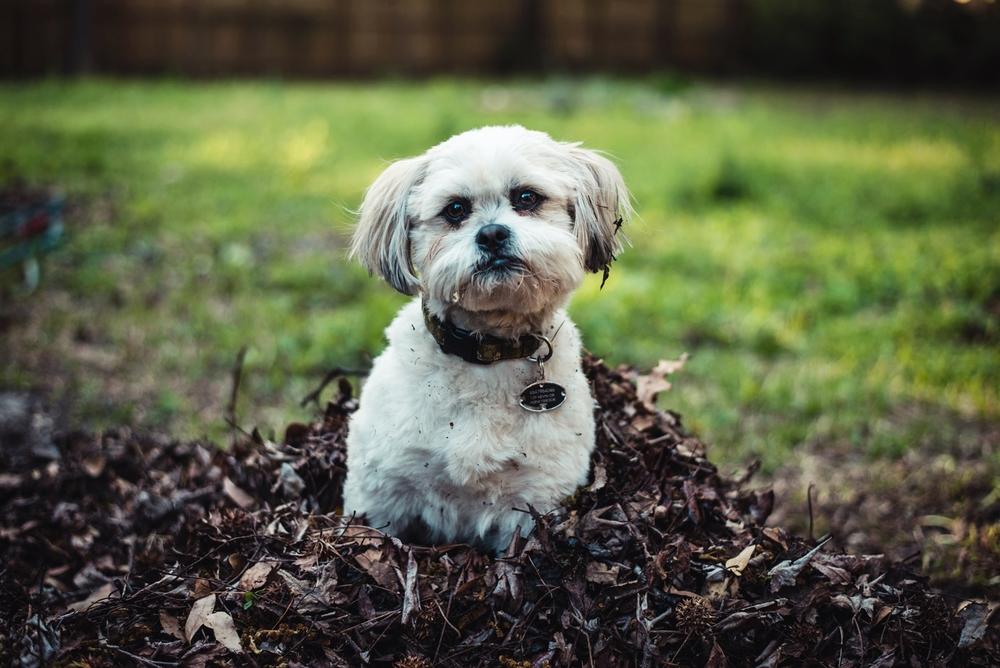 Pets 2015-10Web.jpg