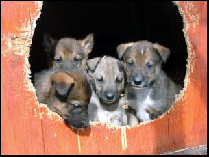I_Pups_door.jpg