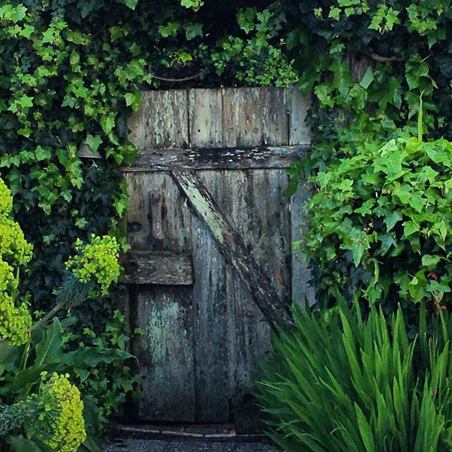 Secret garden. #mendocino #northerncaliforniacoast