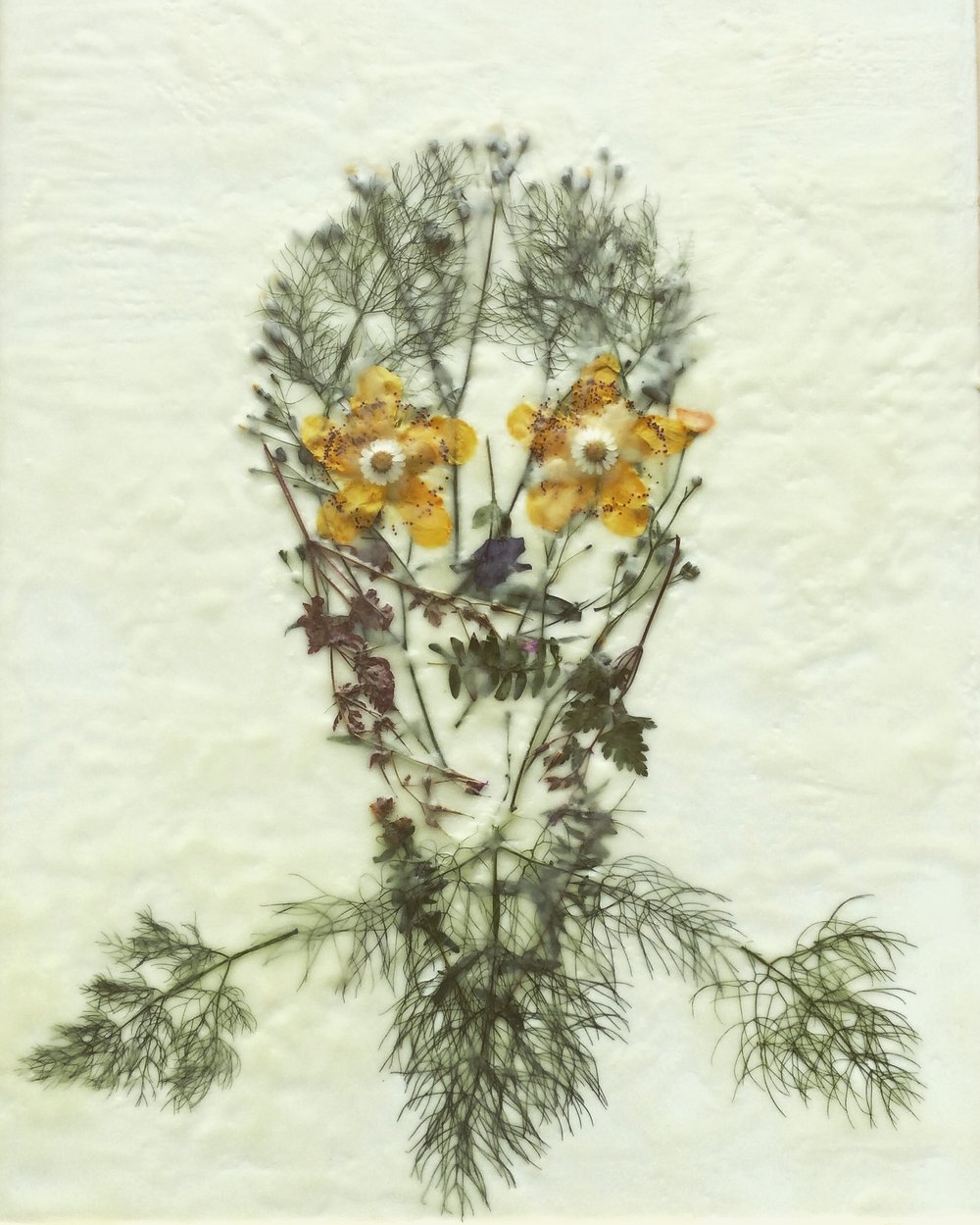"""""""Mind Garden III"""", 8"""" X 24"""", pressed plants and encaustic, 2016"""