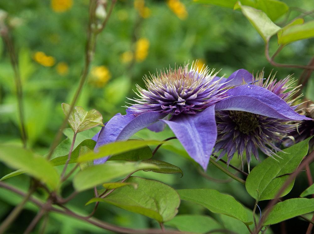 Garden 03.jpg