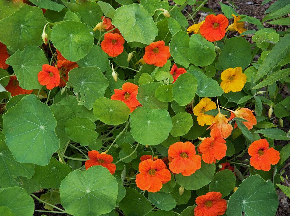 Garden 08.jpg