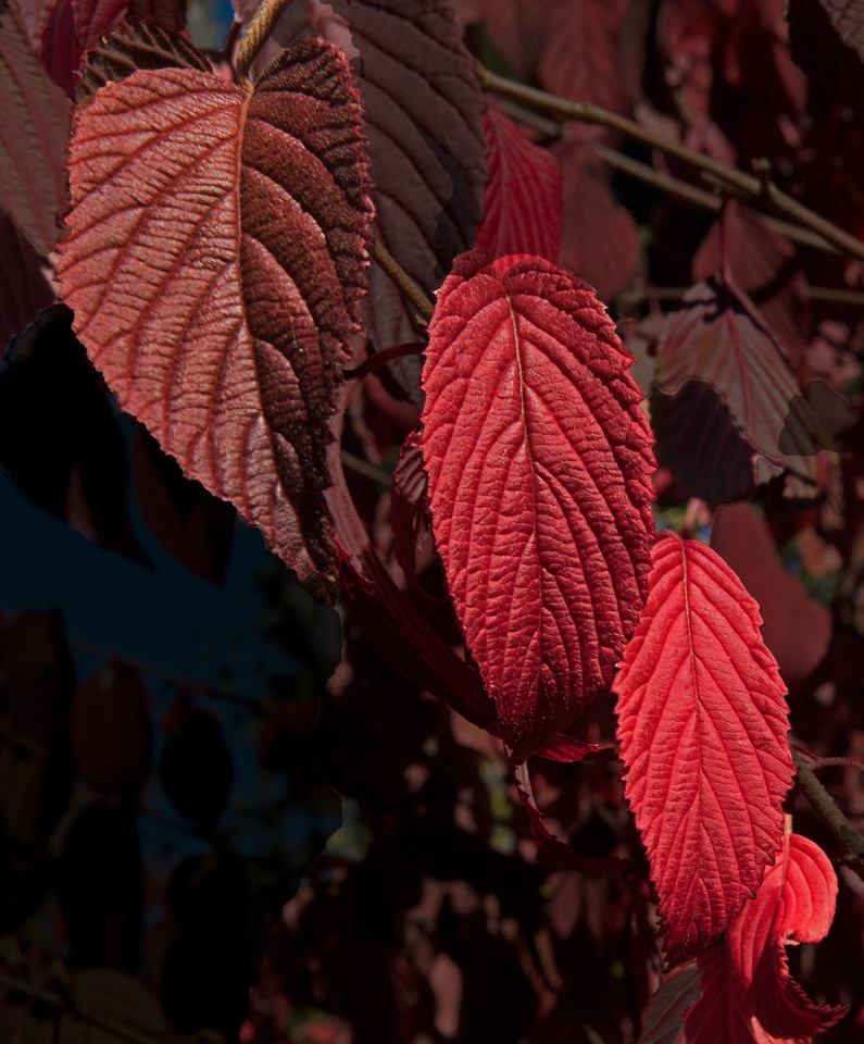 Fall 12.jpg