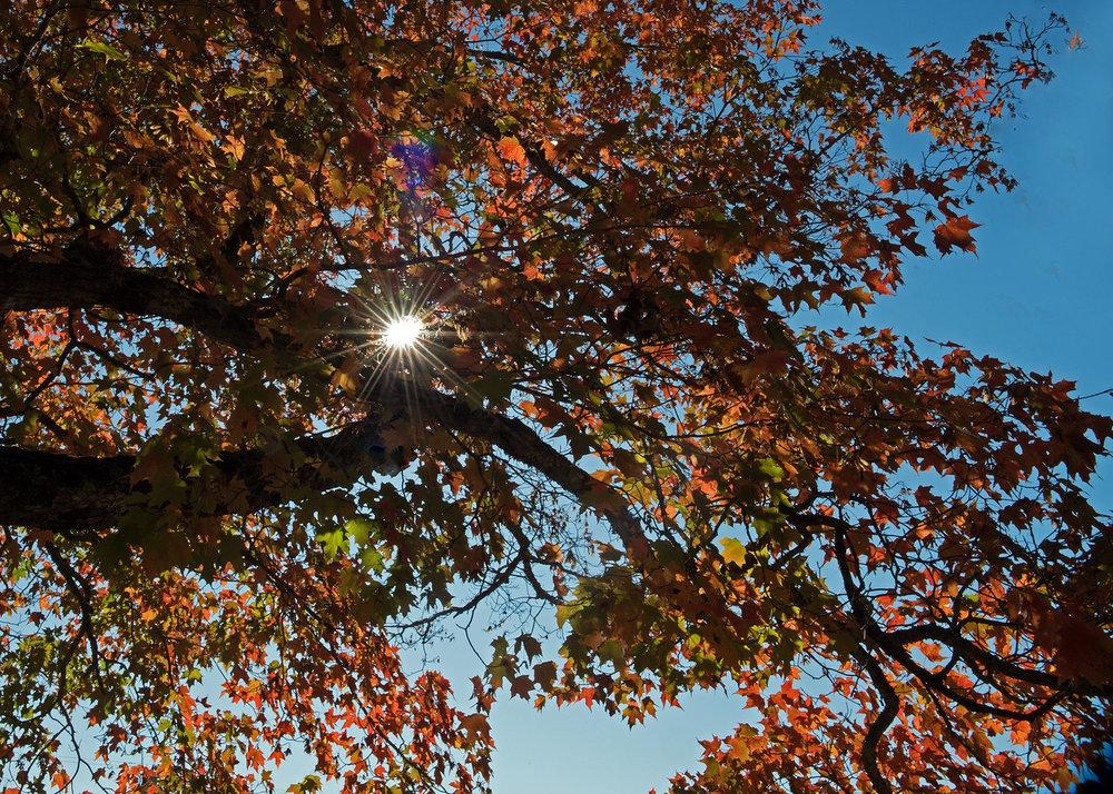 Fall 05.jpg