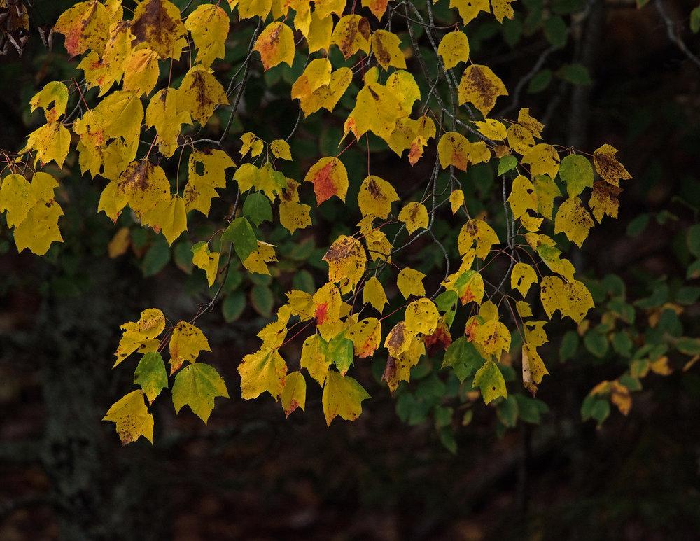 Fall 06.jpg