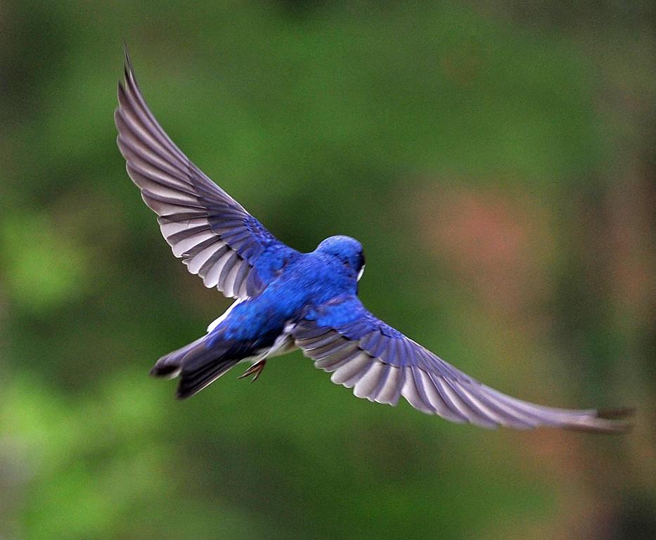 Blue 05.jpg