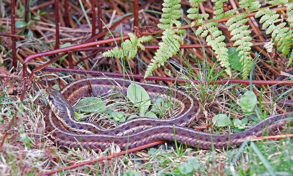 Snake 01.jpg
