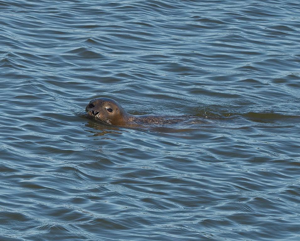 Seal 01.jpg