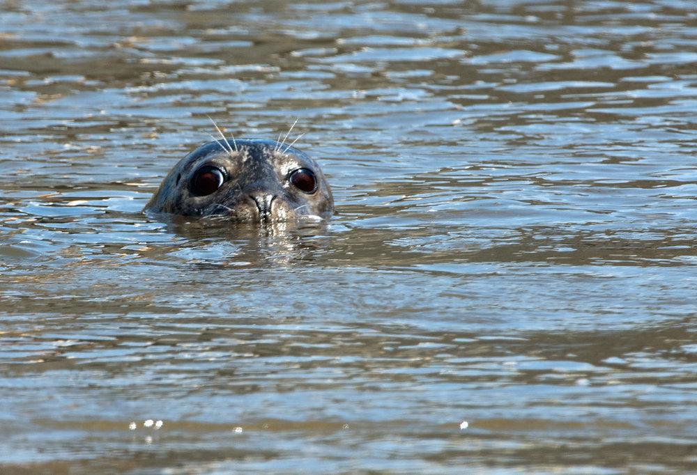 Seal 03.jpg