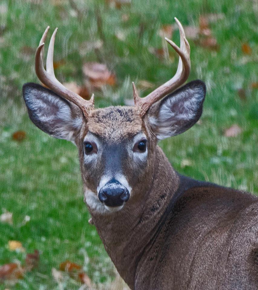 Buck 03.jpg