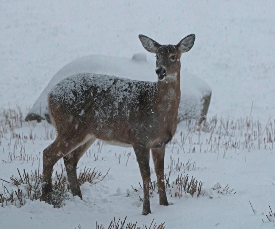 Snow 01.jpg