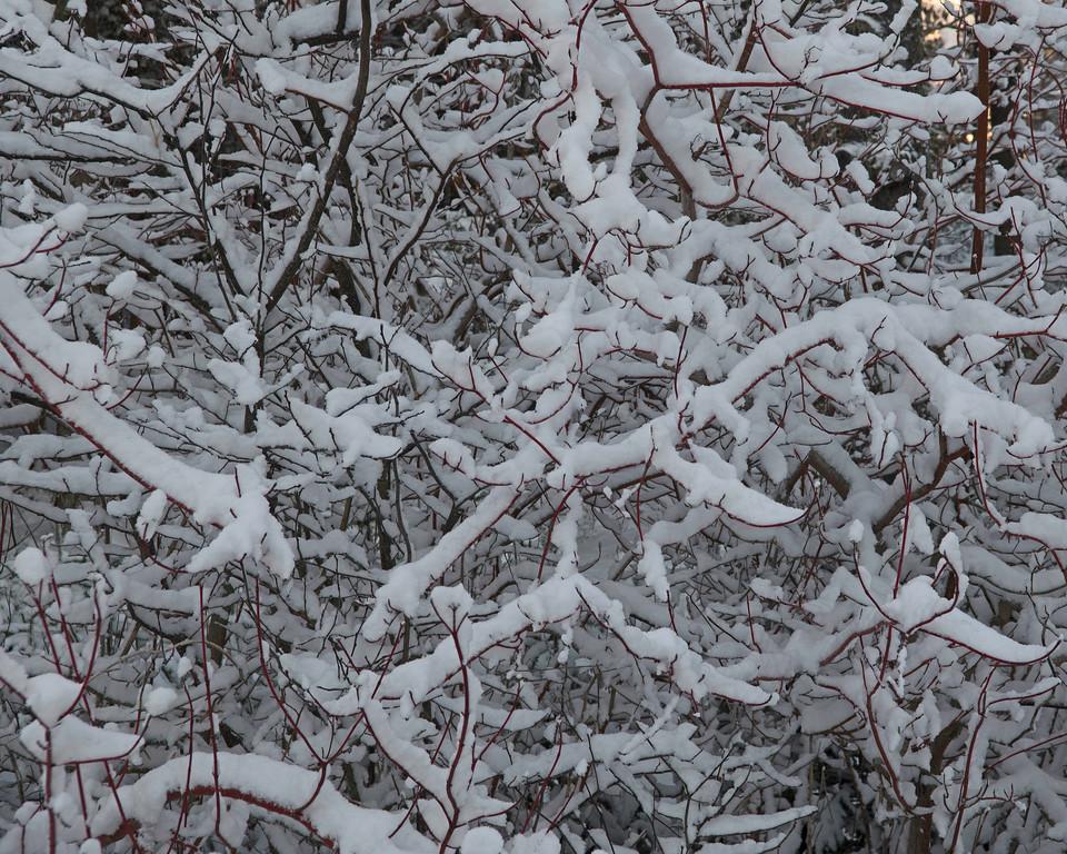 Snow 06.jpg