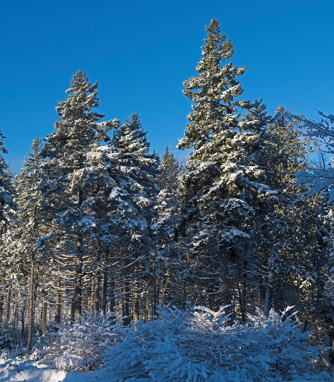 Snow 10.jpg