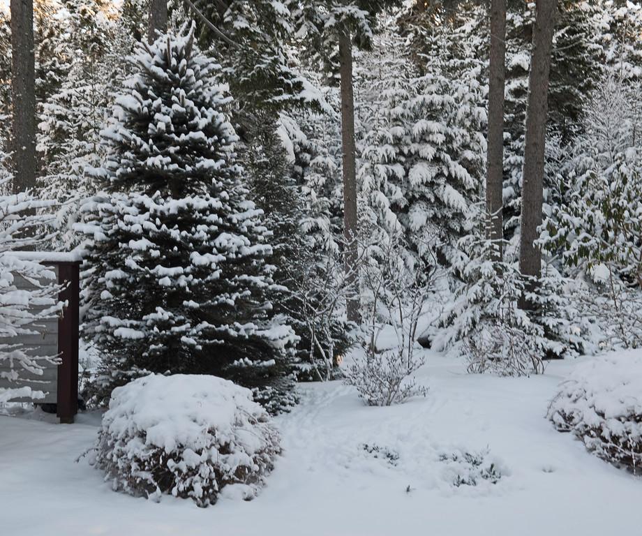 Snow 12.jpg