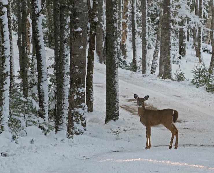Deer 03.jpg