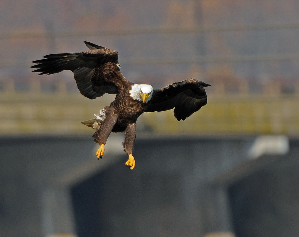 Eagle 03.jpg