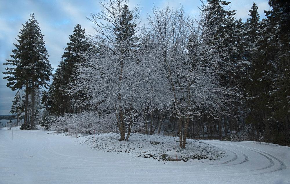 Snow 11.jpg