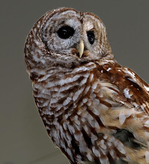 Owl 03.jpg