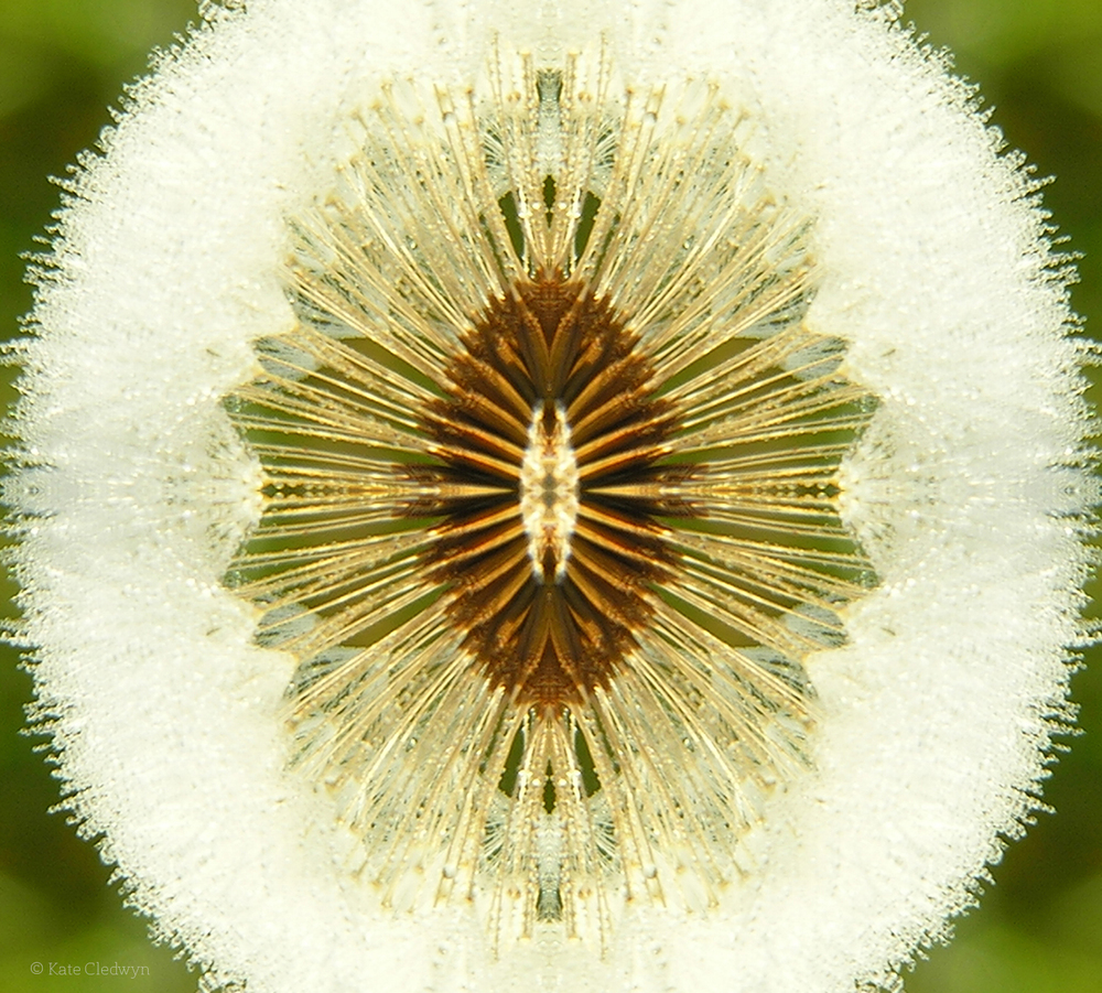 Seed Burst