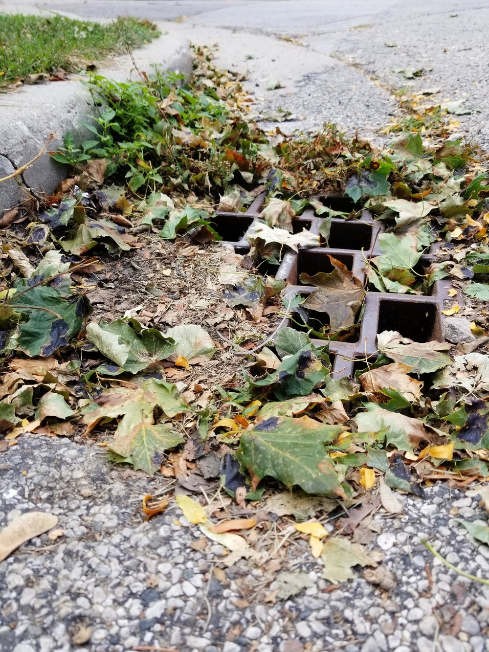 Debris in a storm drain...
