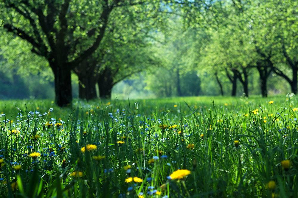 naravno okolje