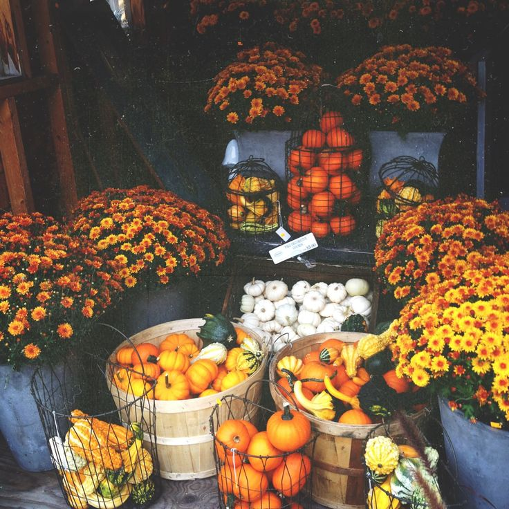 Autumn mums and pumpkins