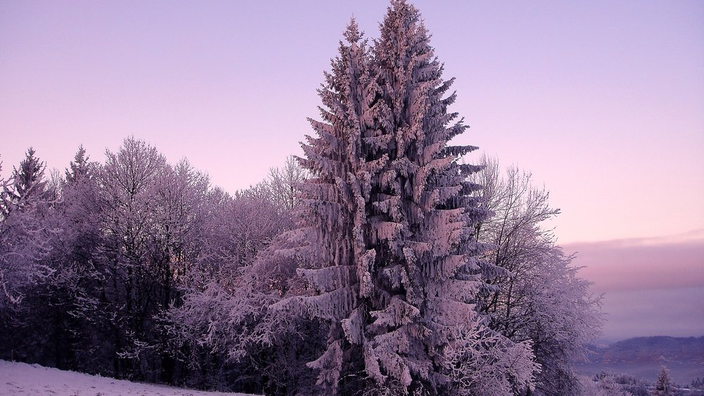 Lilac Winter Setting