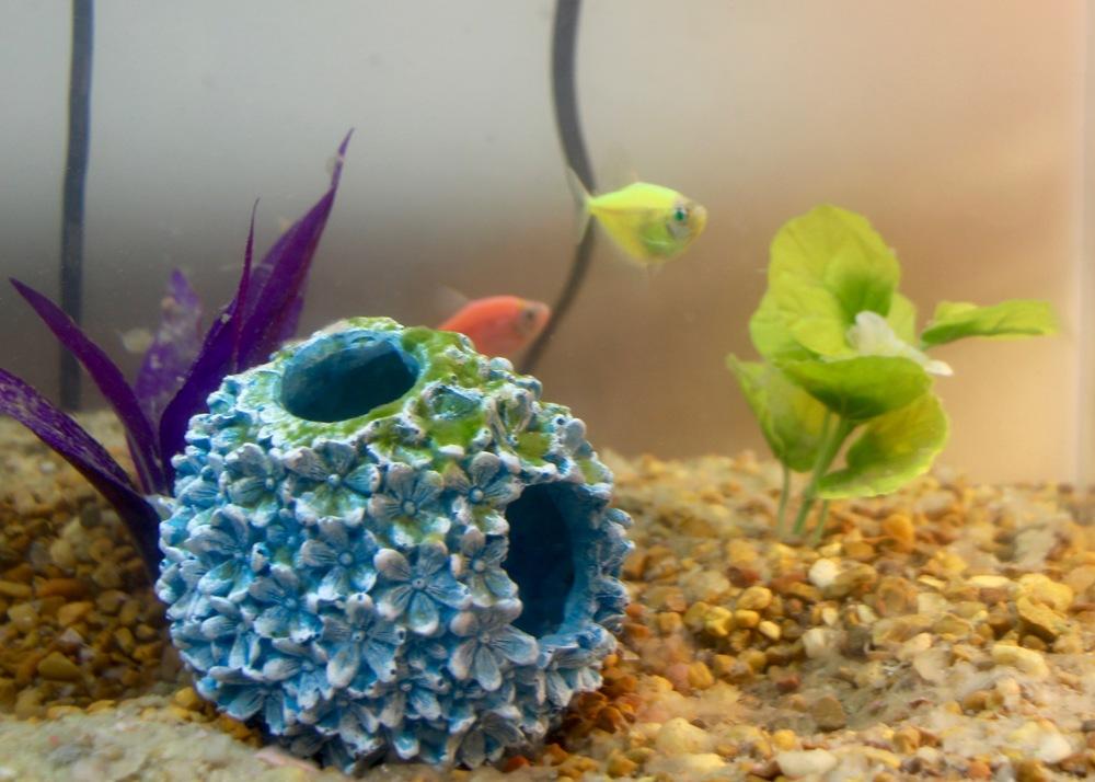 Fish residing in P3