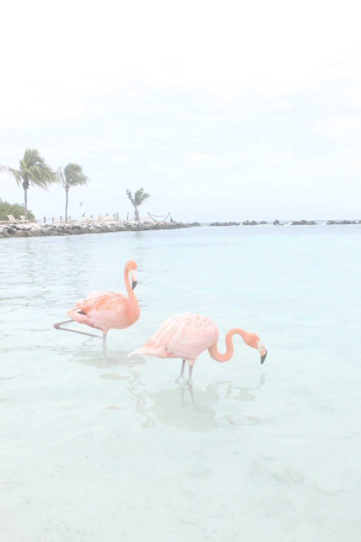 Aruba Travel Journal/ Guide | Flamingos, Best Beaches, Activities, Dining, Caribbean Holiday, Best Beaches in the World, Renaissance Island, Flamingos | Loveshyla.com