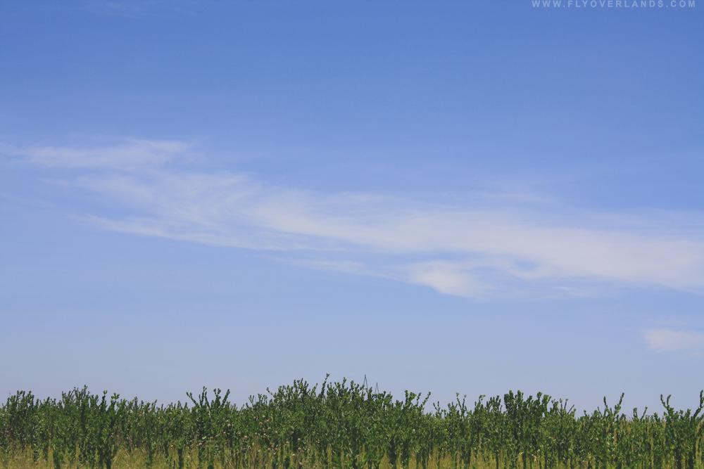 cactustops.jpg