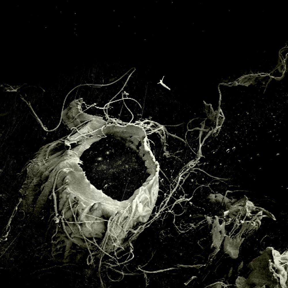 Nano fiber Universe | Cosmic Garden | Carla Ciuffo