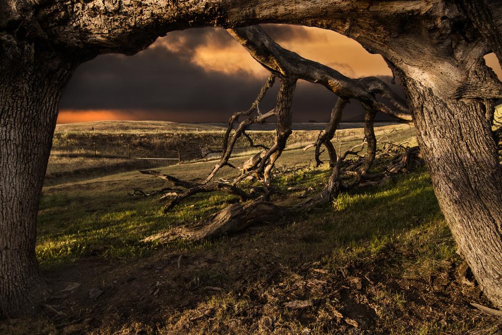 Walker_d_Landscape-13.jpg