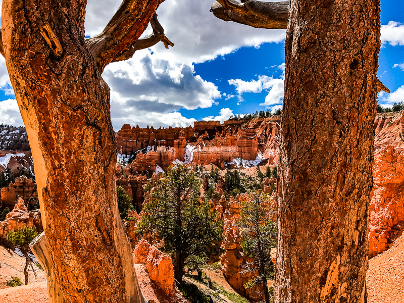 Floor of Bryce Canyon