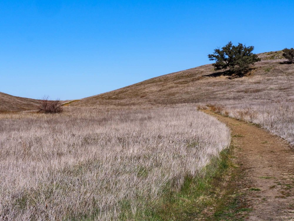 Santa Rosa Preserve