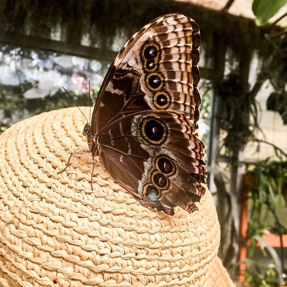 Butteryfly Garden