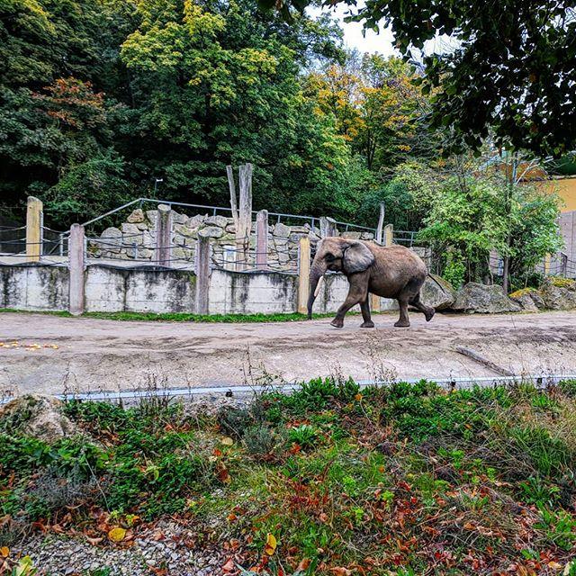 """Nature's great masterpiece, an elephant; the only harmless great thing."" - John Donne . . . . . #vscocam #vsco #austria #österreich #vienna #wien #schonnbrunn #zoo #tiergarten #elephant #animals #igtravel #🇦🇹 #elefant"