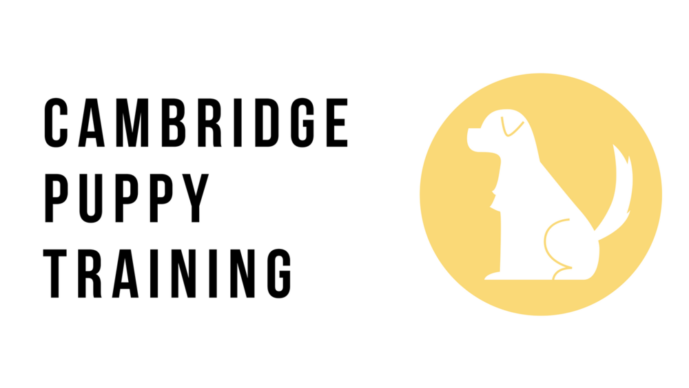 Cambridge-Puppy-Training