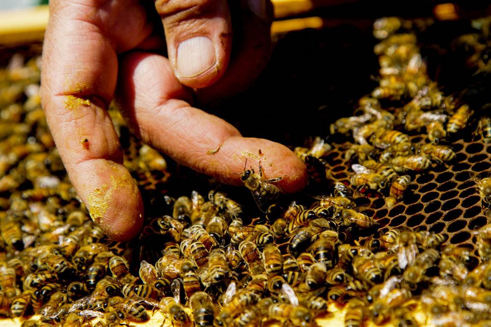 Bees Main Edited
