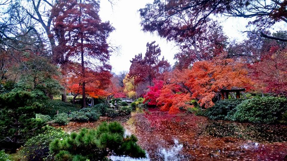 Mid December In The Japanese Garden