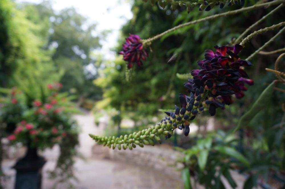 Blooms in the Fuller Garden.