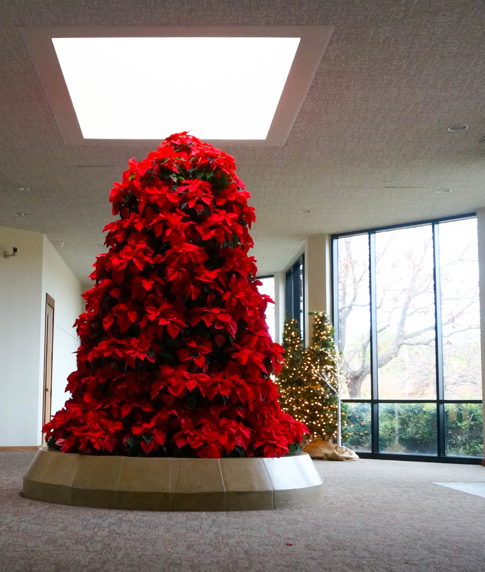 Pictured Above: Poinsettia Tree made of Freedom Poinsettias