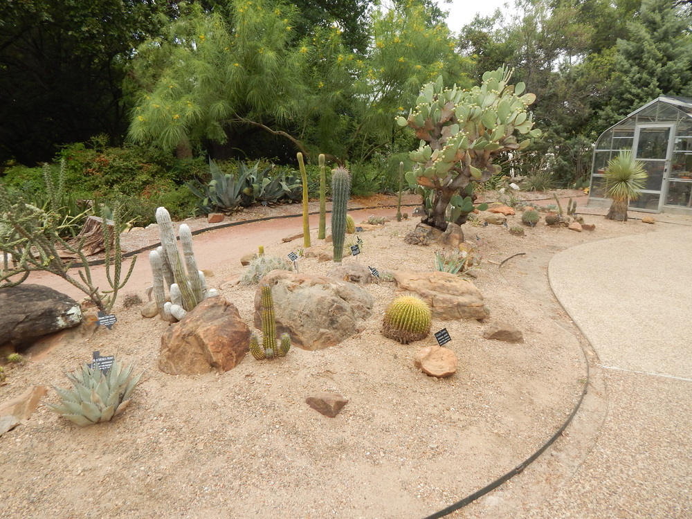 Since 2015 The FWCCS Has Been Working Toward A Complete Renovation Of The Cactus  Garden.