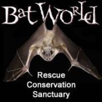 bat world.jpg