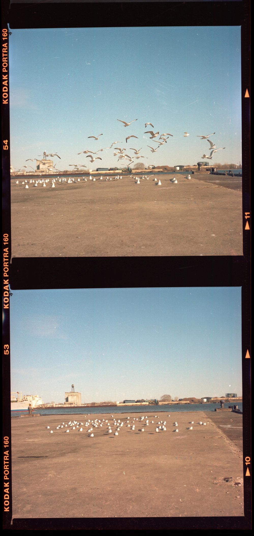 seaguls014.jpg