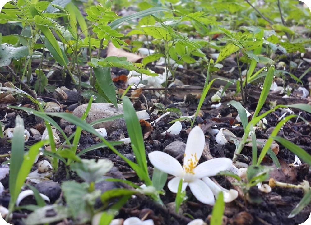 Flower in a garden patch. Raquel Conde