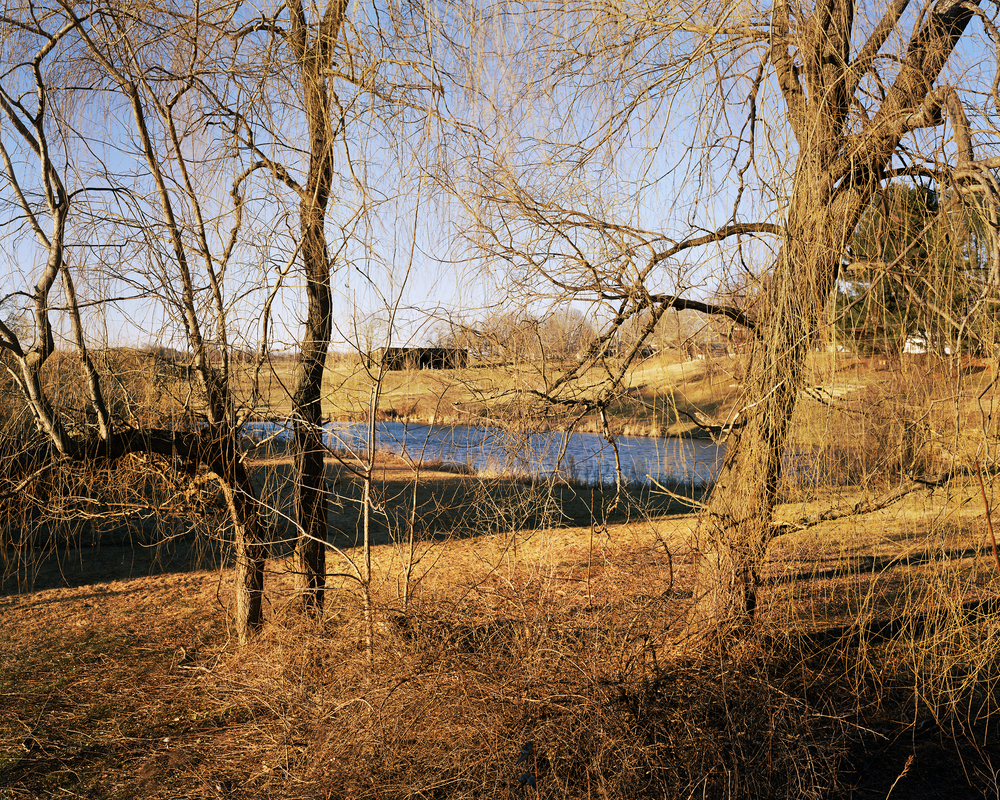 trees pond sunset book.jpg