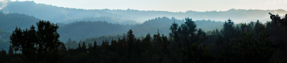 tree lines_header.png