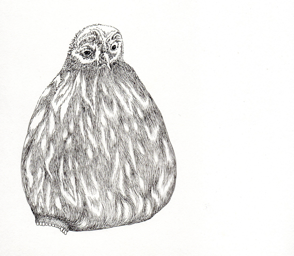 Owl with bottom mouth