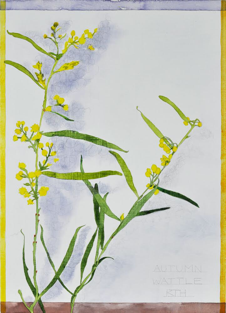 Katy Hood Autumn Wattle Silverpoint _ acrylic on cradled wooden panel 22x31 $120.PNG